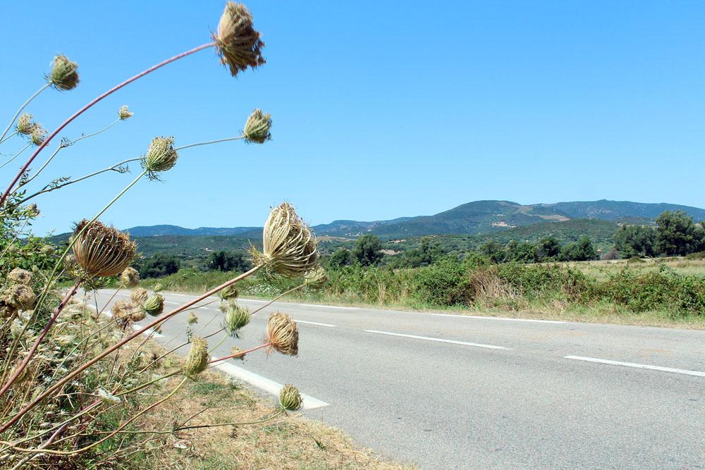 corse_en_moto_sur_la_route