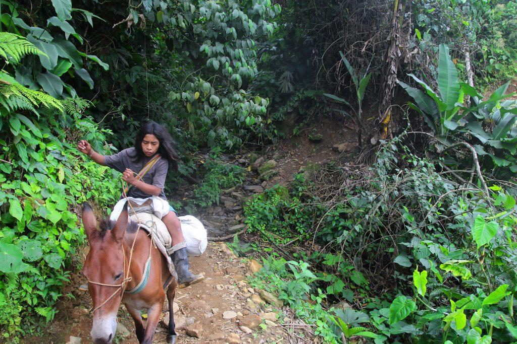 trek_cheval
