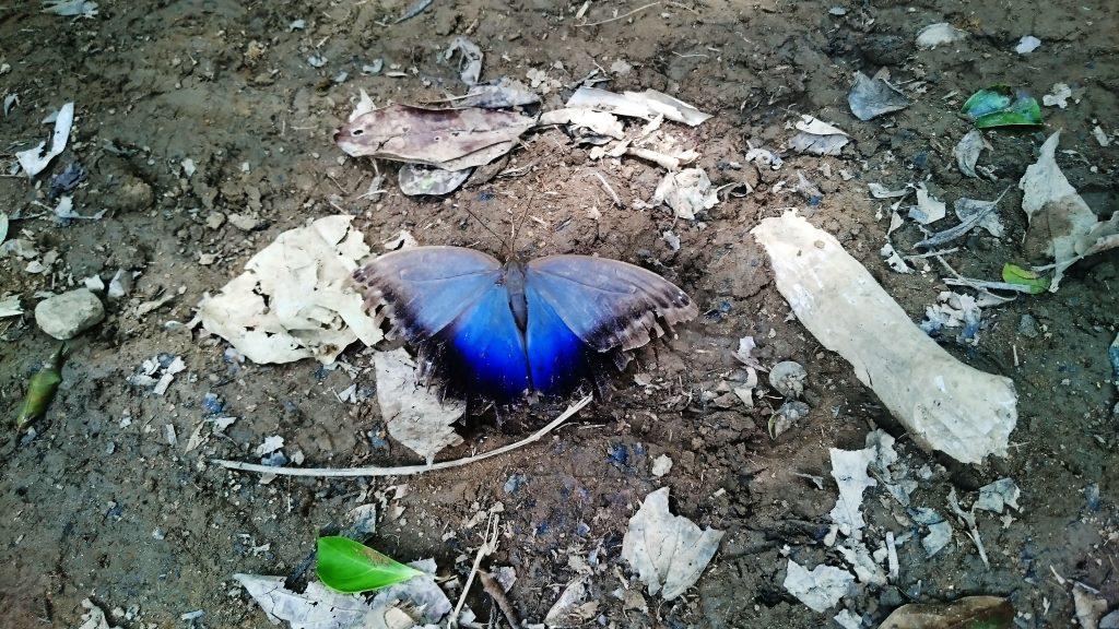trek_papillon_bleu