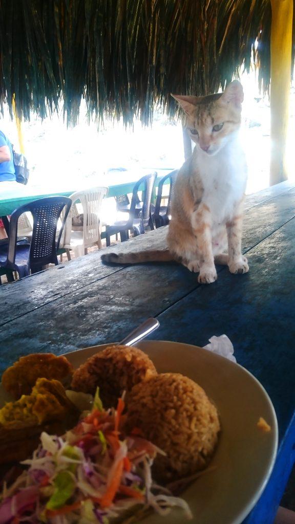 cuisine_colombienne_manger_avec_les_chats